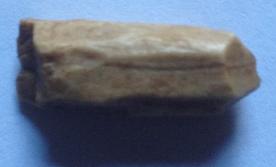 beaver tooth